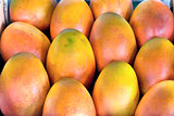 Grove Grown Mangoes Closeup