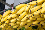 Bunches of Yellow Bananas