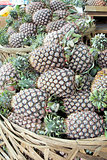 Pineapples Piled in Basket Closeup