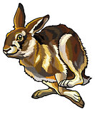 running hare