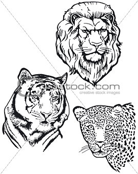Three predators, lion, tiger, leopard