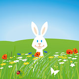 Rabbit on the meadow