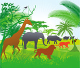 Jungle with animals