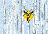 Attention deer in the woods