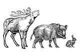 Deer, wild boar and rabbit