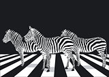 Zebra crosswalk on