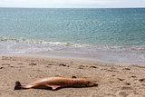 Dead Bottlenose dolphin.