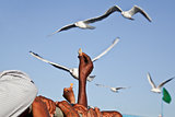 Feeding Seagulls on the ferry at Bet Dwarka
