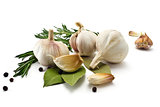 Garlic and rosemary and bay leaf isolated on white background