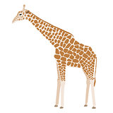 Giraffe vector