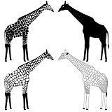 Giraffe silhouettes collection