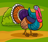 turkey farm bird animal cartoon illustration