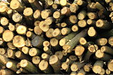 Dry firewood in a pile for furnace kindling