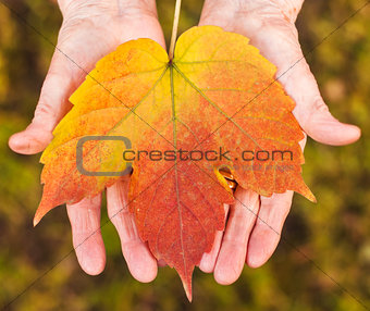 Hands holding a leaf