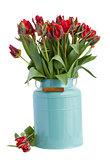 spring tulip flowers in blue