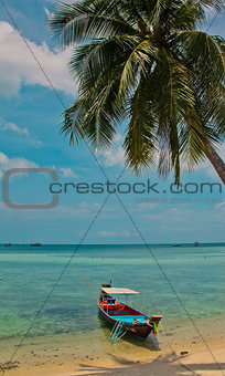 Longtail boat on a beach with palm tree