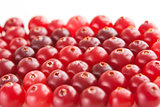 ripe red cranberry, background
