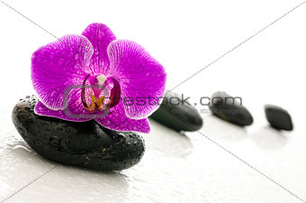 Black pebbles and orchid flower with water drops