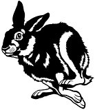 running hare black white