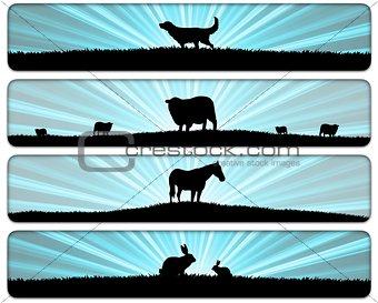 Animal Scenes
