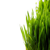 grass