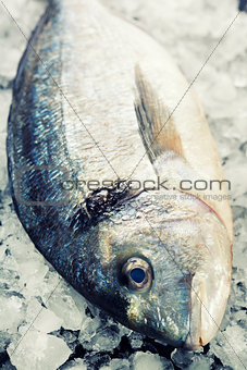 fresh dorada fish on ice