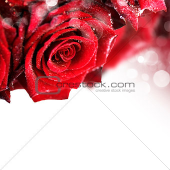Beautiful Red Roses with water droplets