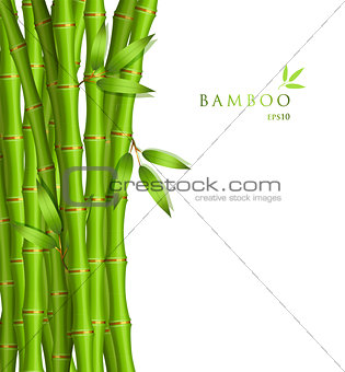 Background with green bamboo