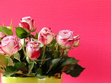 flowers roses in a vase on a pink background