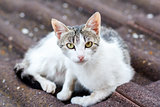 close up front view of cat on tile roof 