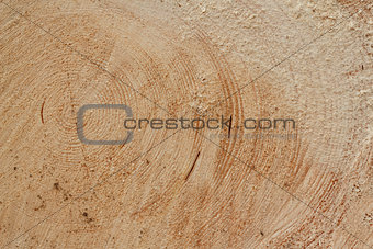 slice of wood timber