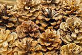 Brown cones