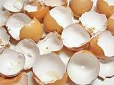 eggshel