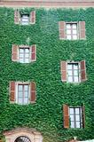 house wall with ivy