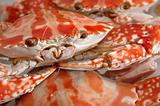 Close up of boiled crab