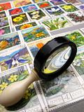 magnifier and collection  stamps