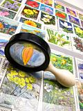magnifier and collection