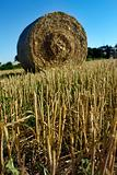 Hay field