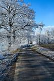 Winter landscape an icy road 