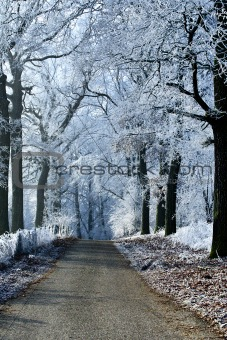 Winter landscape forest road with ice trees