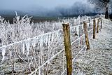 Winter landscape icy barbed wire