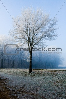 Winter landscape single tree at forest border