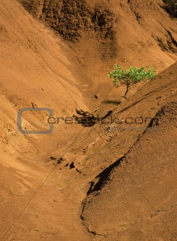 Single tree in red canyon