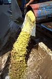 Cyprus white grapes pouring