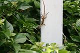 Post Salamander