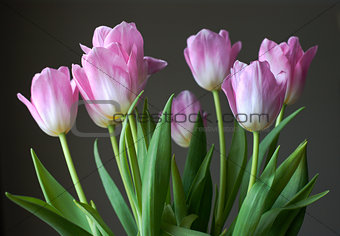 Bouquet of tulips on gray background