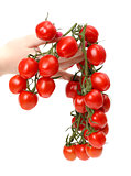 Bunch cherry tomatoes in hand