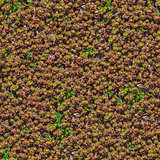 Decorative Grass Seamless Texture.