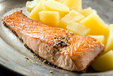 Salmon