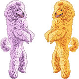 vector two dogs Poodle breed standing on his hind legs